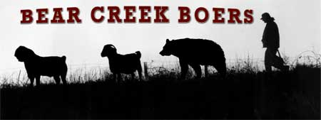 Bear Creek Boers