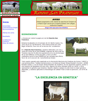 Dorper Sheep for Sale in Mexico