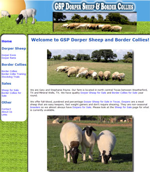 Dorper Sheep for Sale in Texas
