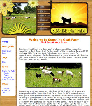 Boer Goats for Sale in Texas